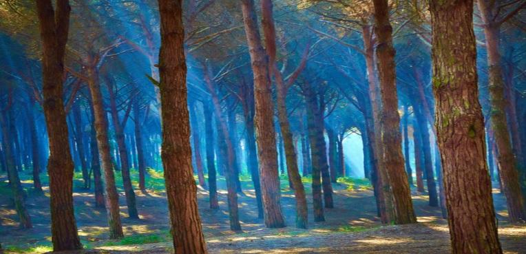 random_forest.jpg
